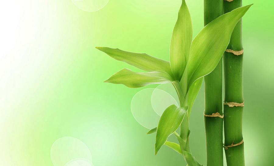 a bambu