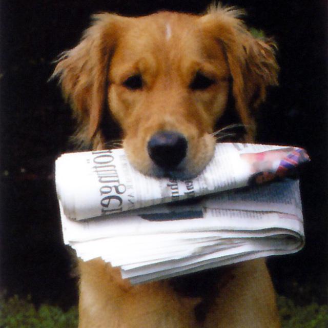 perro-con-periodico[
