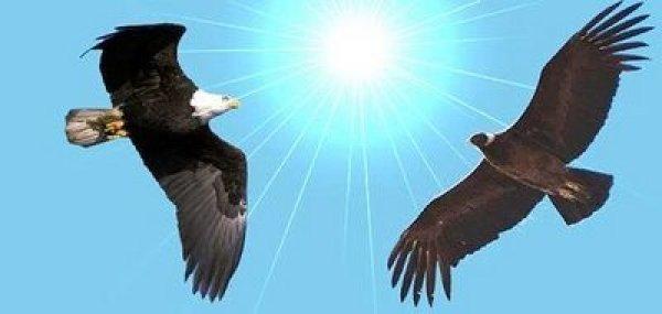 condoryaguila