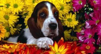 esencias-florales-para-mascotas