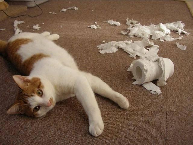 gatos-comportamiento-destructivo